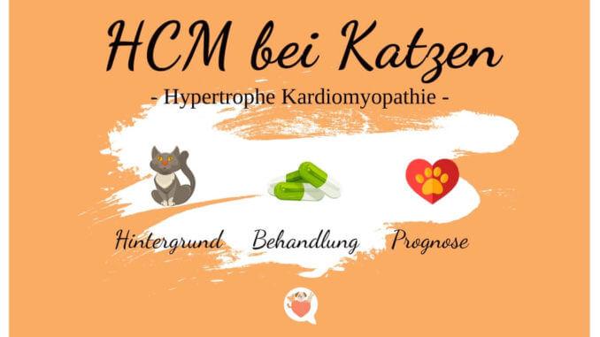 HCM bei Katzen