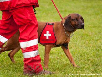 Brauner Jagdhund wird zum Rettungshund ausgebildet