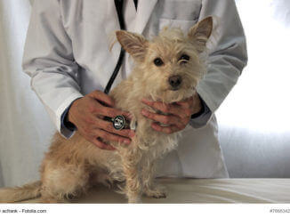 Tierarzttraining: