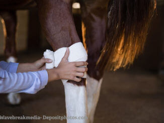 Pferde-OP-Versicherung Verband am Hinterbein eines Pferdes