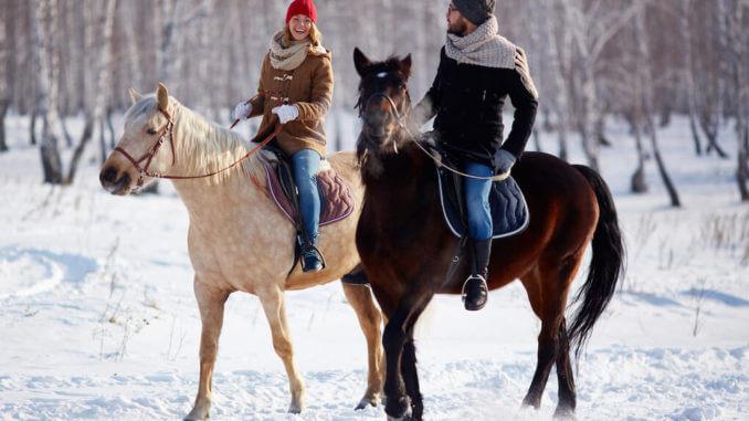 Pferdehaftpflichtversicherungen
