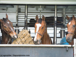 Pferdetransportversicherung der große Ratgeber