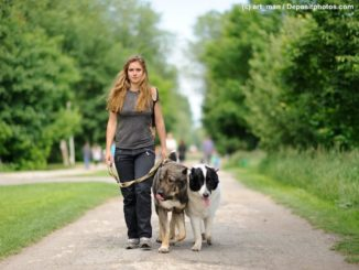 Junge Frau geht mit zwei großen Hunden an der Leine neben sich auf einem Weg in einem Park spazieren