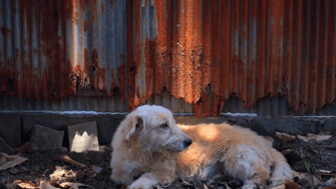 Straßenhunde liegt am Boden