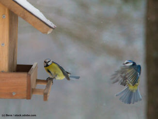 Wildvögel füttern Winter