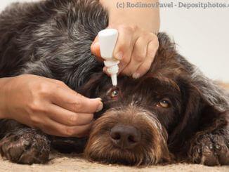 Ein Hund liegt auf dem Boden und eine Frau gibt ihm Augentropfen.
