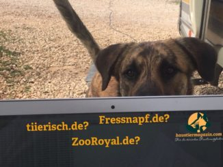 """Ein Hund schaut über den Rand eines laptop auf dem """"tiierisch.de?"""", """"Fressnapf.de?"""" und """"ZooRoyal.de?"""" steht"""