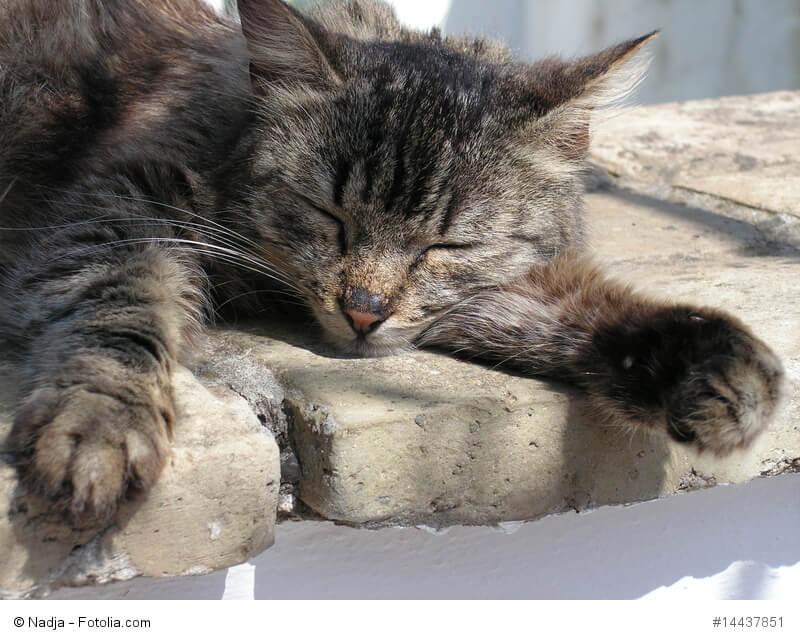 Eine Katze liegt entspannt mit geschlossenen Augen auf ein paar Steinen