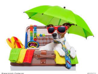Ein Hund in einem Koffer voll mit Urlaubsgegenständen wie einer Sonnenbrille und einem Sonnenschirm