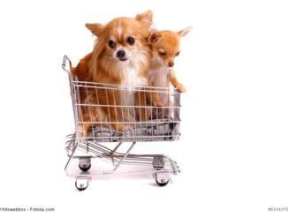 zwei kleine Hunde in einem kleinen Einkaufswagen
