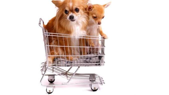 hund kaufen was ist zu beachten woran solltest du denken. Black Bedroom Furniture Sets. Home Design Ideas