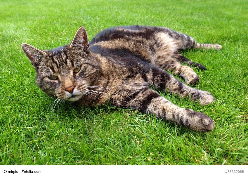 Freigänger oder Wohnungskatze oder doch der katzensichere Garten?