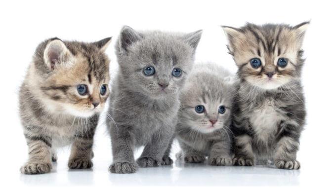Eine Katze kaufen ist einfach, aber was sollte man beachten?