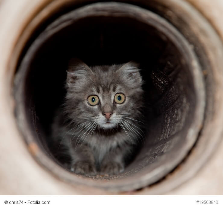 Verängstigtes Kätzchen