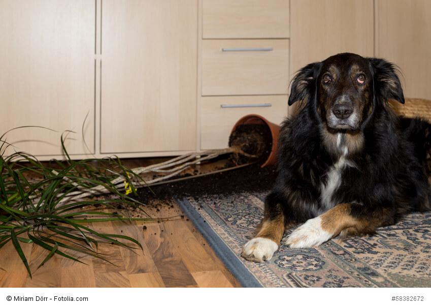 Ein großer Hund liegt neben einem umgeworfenen Blumenkübel