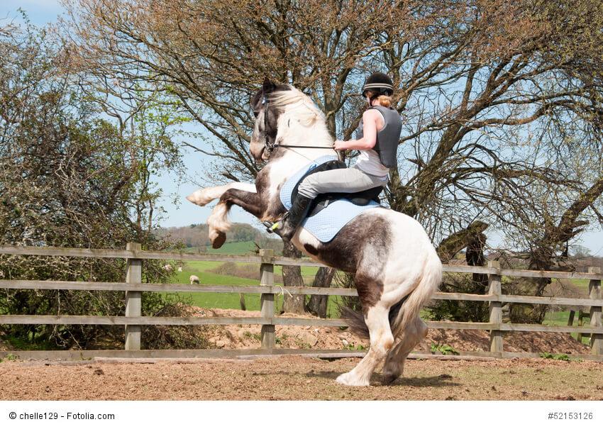 Sich aufbäumendes Pferd mit Reiterin.