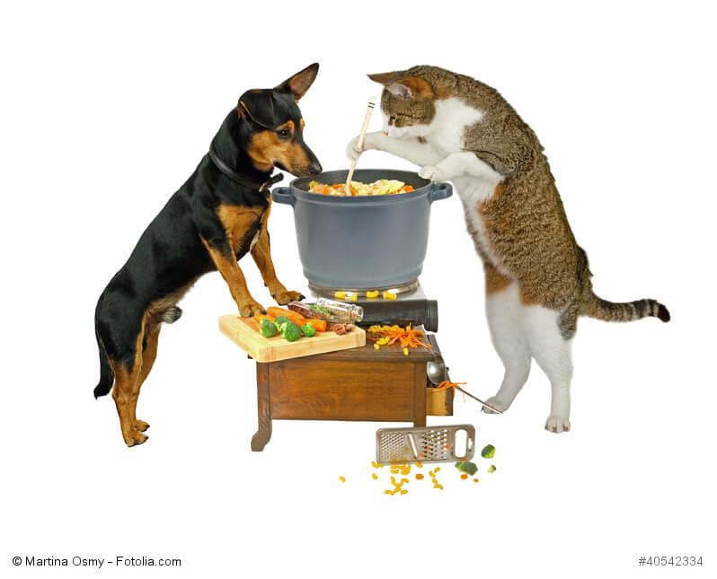 Ein und und eine Katze kochen sich selber ihr Futter