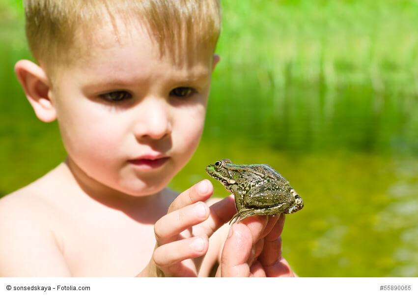 Ein kleiner Junge begutachtet einen Frosch auf seiner Hand