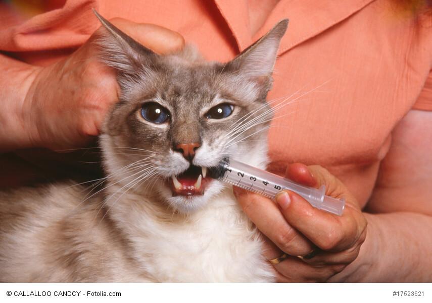 Katze bekommt Medikamente