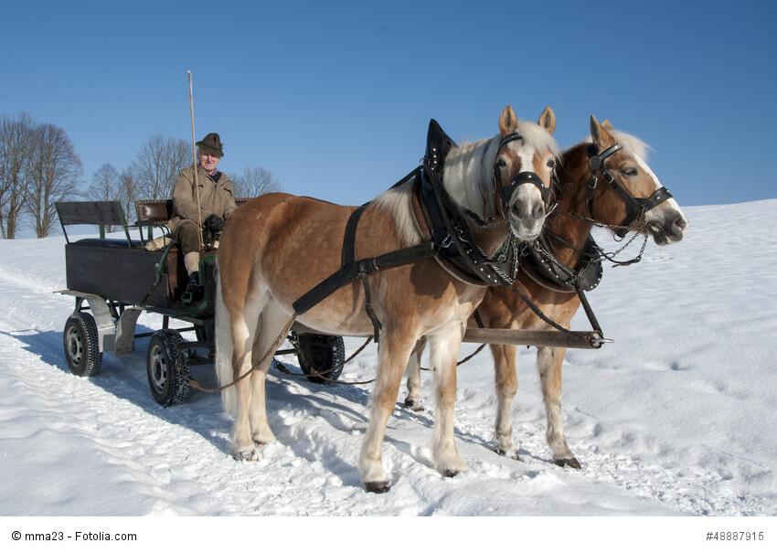Pferdekutsche im Winter