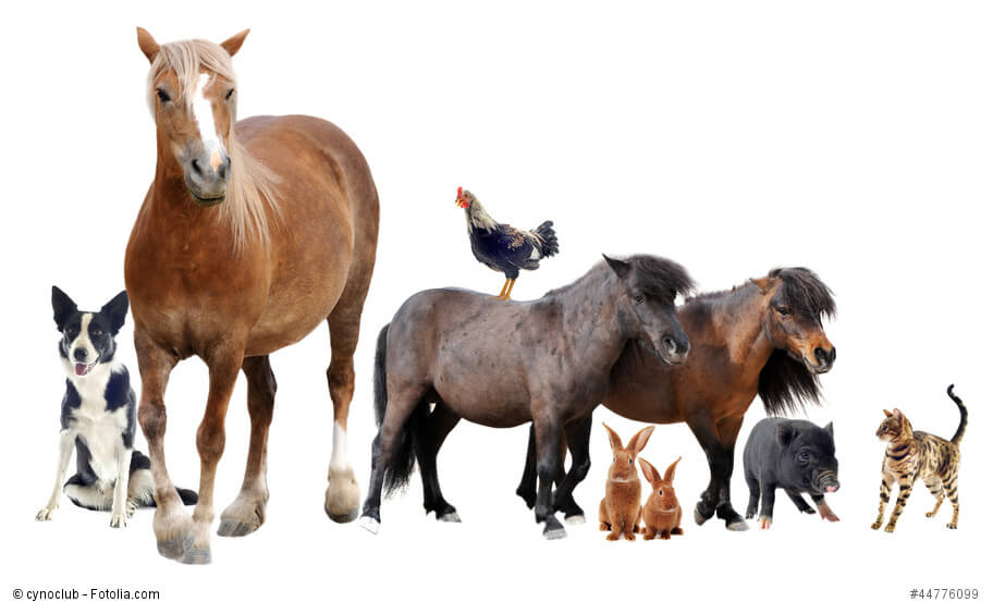 Verschiedene Haustiere
