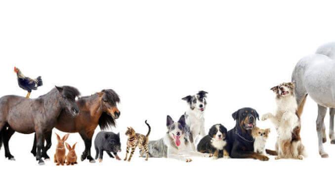 Gruppe unterschiedlicher Haustiere