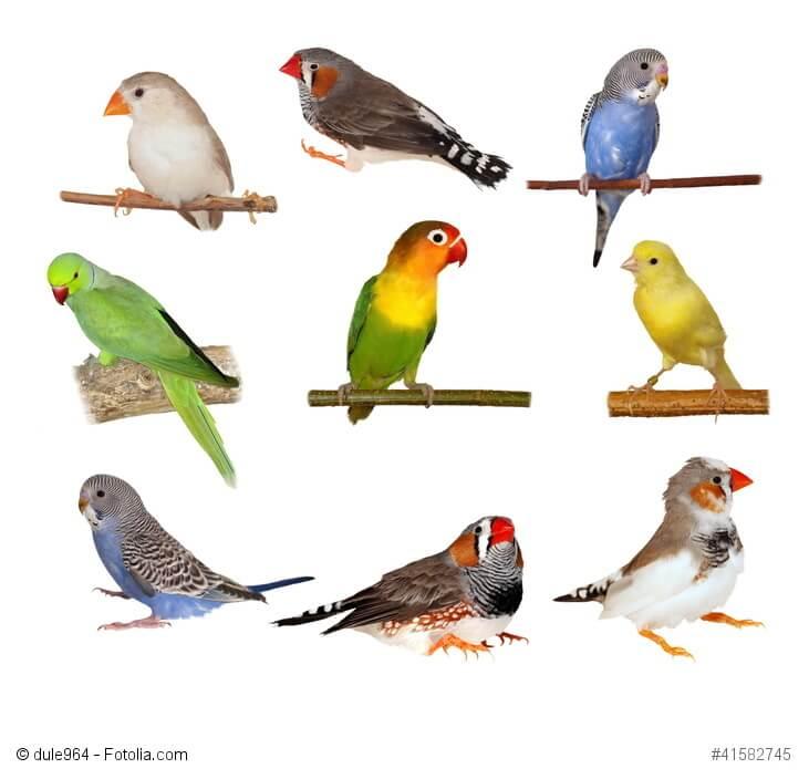 Verschiedene Haustiervogelarten sitzen auf ihren Ästen