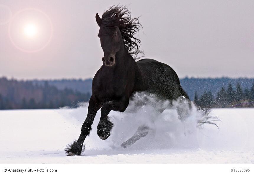 Фото лошадок