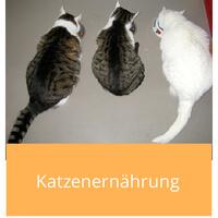 Katzenernaehrung