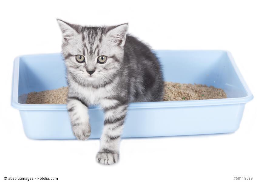 Ein Kätzchen steigt aus einem Katzenklo