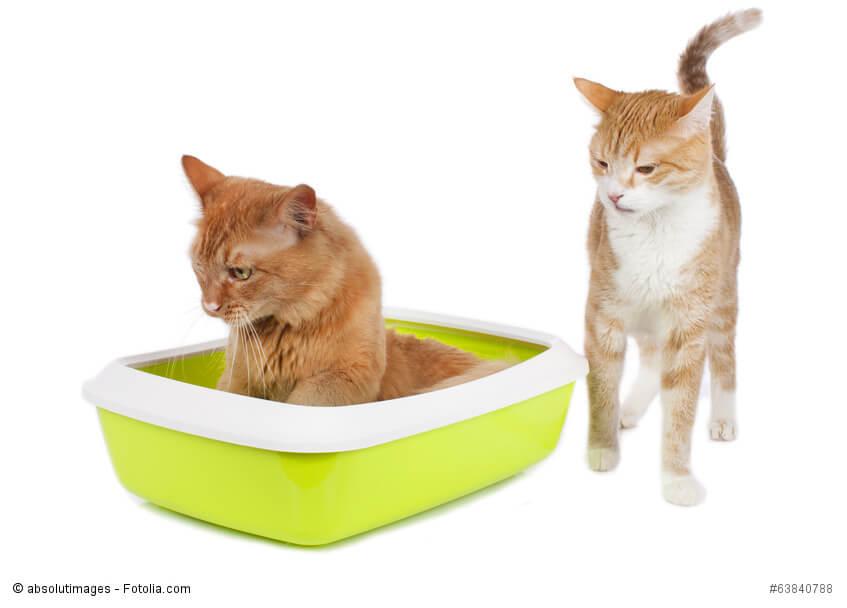 Eine Katze sitzt im Katzenklo, eine andere steht böse aussehend daneben