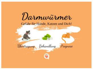 Darmwürmer betreffen Katzen und Hunde gleichermaßen.