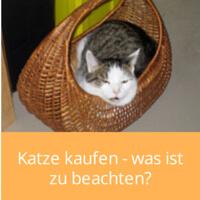 Katze kaufen - was ist zu beachten