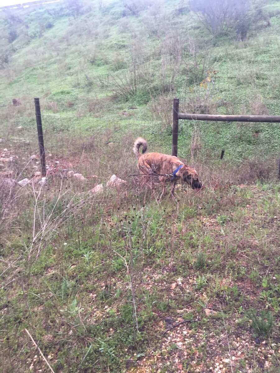 Ein Hund schnuppert auf einer Wiese mit Gestrüpp