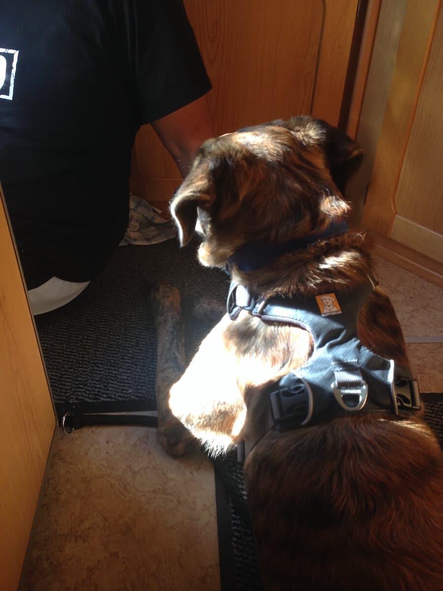 Ein Hund mit Geschirr liegt aufmerksam in einem Wohnmobil