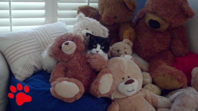 Felix, die Katze, versteckt sich in Kuscheltieren