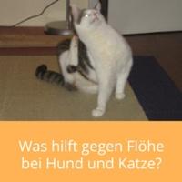 floehe-katze-hund