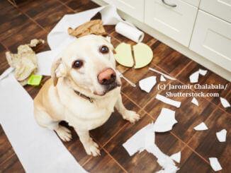 Ein Hund sitzt ängstlich schauend inmitten im Chaos