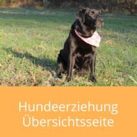 hundeerziehung-uebersicht