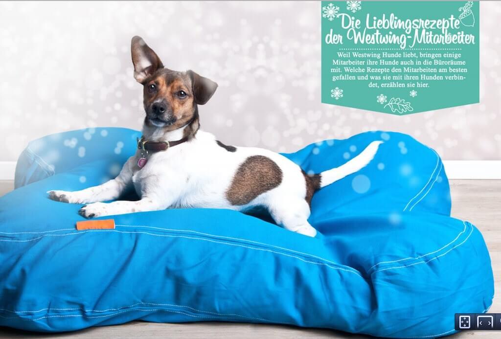 Hund auf einem blauen Kissen