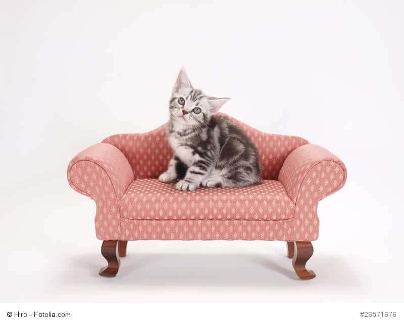teppich geruch entfernen geruch aus teppich entfernen luxus teppich poco teppich geruch. Black Bedroom Furniture Sets. Home Design Ideas