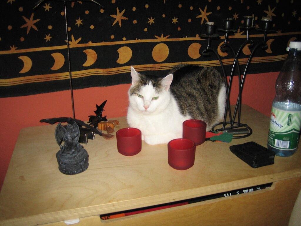 Eine Katze liegt auf einer Kommode