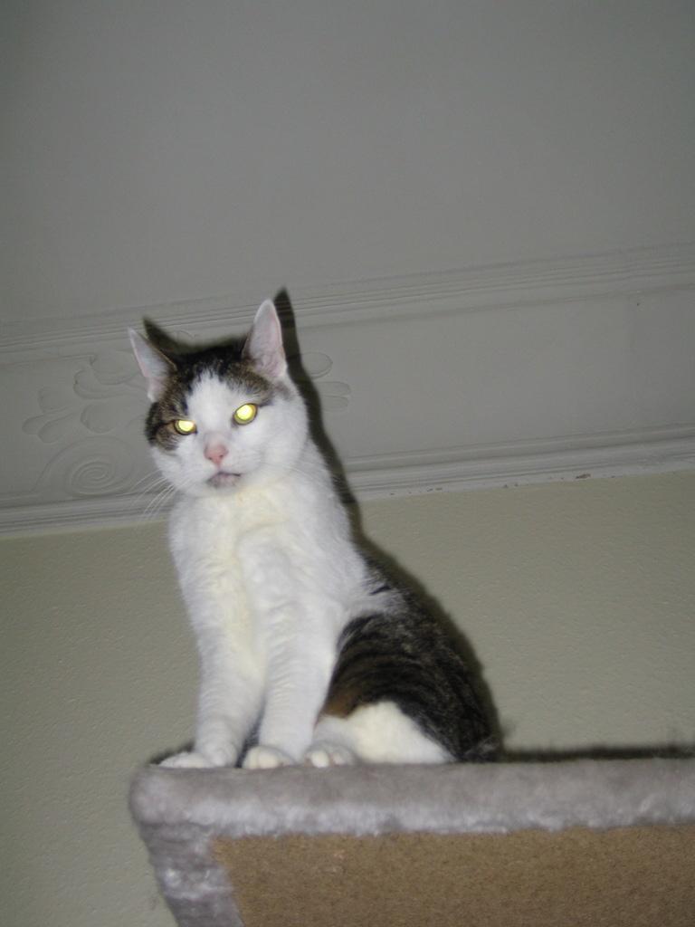 Katze thront unter der Decke auf einem Kratzbaum