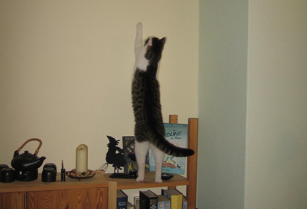 Katze kratzt an einer Wand