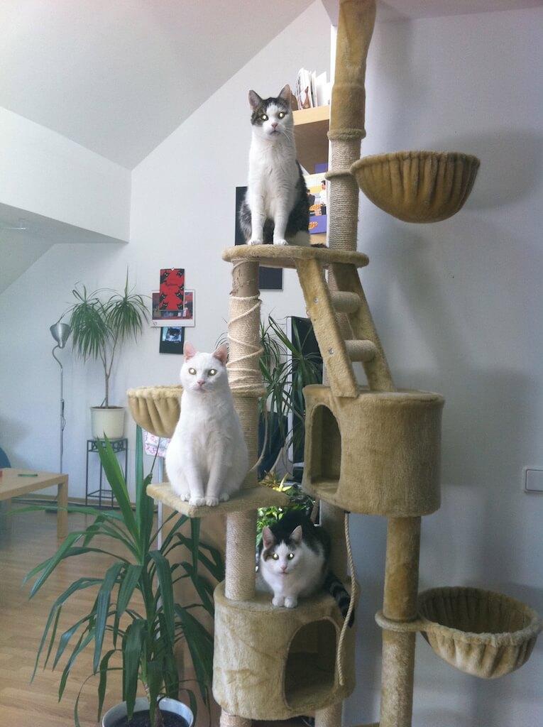 Heller Kratzbaum mit drei Katzen auf verschiedenen Ebenen