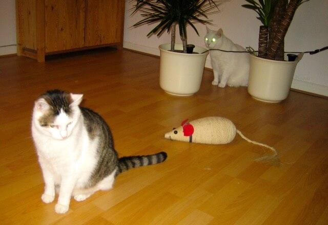 Zwei Katzen sitzen in einem Wohnzimmer zwischen ihnen eine große Maus zum Kratzen