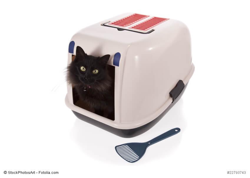 pinkeln oder markieren warum ist meine katze unsauber. Black Bedroom Furniture Sets. Home Design Ideas
