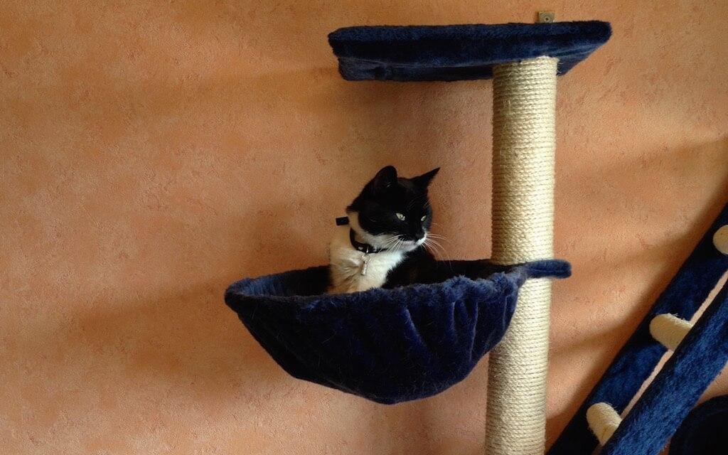 Eine Katze sitzt in einer Mulde auf einem kratzbaum und schaut zur Seite