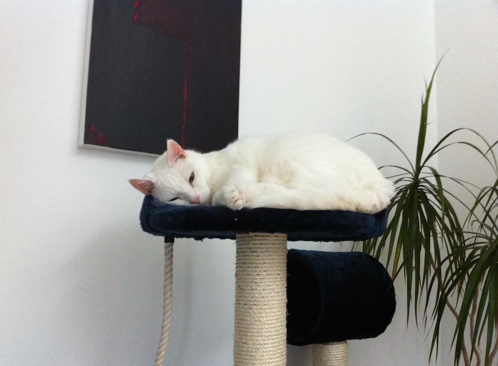 Eine weiße Katze schläft auf einem Kratzbaum