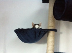 Eine Katze linst aus einer Mulde, die an einem Kratzbaum hängt